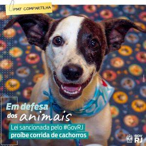 Corridas de cachorros estão proíbidas no estado do Rio