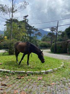 Proprietários de cavalos soltos em ruas são multados pela COPBEA