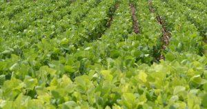 Prefeitura apresenta Programa Municipal 'Agricultor Legal'